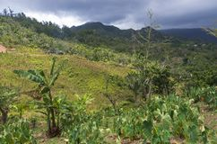 Foothills of Cordillera Central in Jayuya stock image