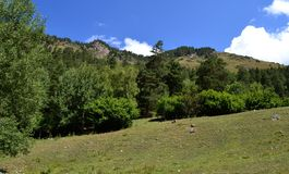 The foothills of the teberdinskiy reserve. Photo taken on: July 27 Saturday, 2013 Royalty Free Stock Photos