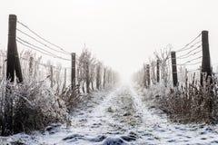 foothillskullligganden lines vingårdvinter för två by arkivfoton