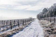 foothillskullligganden lines vingårdvinter för två by royaltyfria bilder