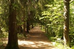 foothpath通过森林自然风景背景 免版税库存照片