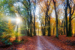 Foothpath autumn sunrise. Beautiful morning sunrise in autumn in the Speulder forest in the Netherlands with vibrant colored leaves Stock Photo