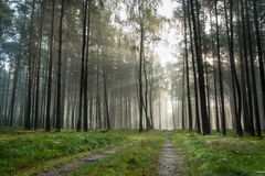 Foothpath in foggy forest. At sunrise Stock Photo