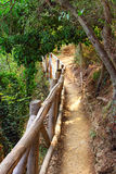 Foothpath through the forest. Quiet foothpath through the forest, Cinque Terre, Italy Stock Photos