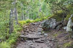 Foothpath in High Tatras mountains - Slovakia. Nature: foothpath in High Tatras mountains - Slovakia Royalty Free Stock Photography