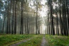 Foothpath im nebeligen Wald Stockfoto