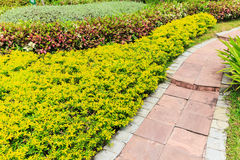 Foothpath with ornamental plants. In the garden Royalty Free Stock Photos