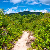 Foothpath in tropical nature Stock Photos