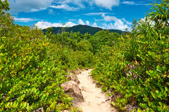 Foothpath in tropical nature Stock Photography