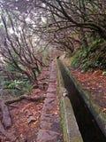 Foothpath wycieczkuje wzdłuż wodnego irygacyjnego kanału w maderze, nastrój obraz royalty free