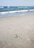 Footmark in the sand. A footmark of a seagull in the sand Royalty Free Stock Photo