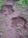 Footmarks av elefanten på jordning royaltyfria bilder