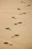 Footmarks on sand on beach Royalty Free Stock Images