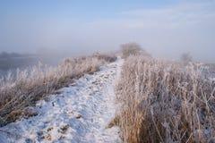 Footpah в туман Стоковая Фотография RF