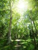 Footpat mellan trees i grön skog Royaltyfri Bild