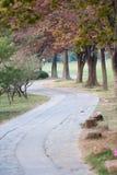 Footpath в парке Стоковые Изображения RF