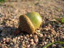 footpath жолудя стоковое изображение rf