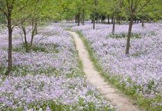 footpath цветка поля стоковые фото