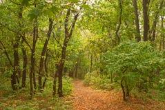 Footpath. The footpath among autumn wood Stock Photo