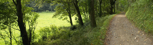 Footpath. Through woodland between trees - the estate of hartland abbey stately home devon uk royalty free stock photo