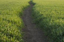 footpath Fotografia Stock