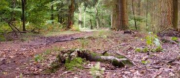 footpath fotografie stock libere da diritti