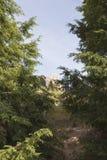 footpath Стоковая Фотография RF