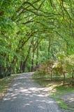 footpath Imagem de Stock