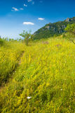 Footpath. Through a grass in Crimea mountains Royalty Free Stock Photo