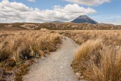 Footpath across grassland in Tongariro National Park Royalty Free Stock Photos