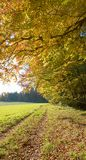 Footpath along the edge of the autumnal forest, upright format Stock Image