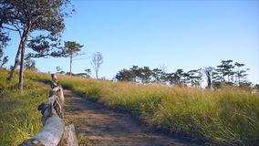 Footpath along grass flower and meadow with row of pine tree against blue sky stock video