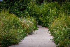 Footpath along lush wildflower garden. Footpath in a lush wildflower garden stock images