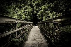 Footpath along an old wooden bridge. In a tropical park with over grown trees royalty free stock photos