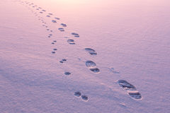 Footpath and animal track on snow Royalty Free Stock Photo