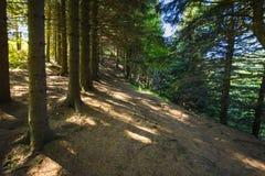 Footpath around the Lake Pavin in Auvergne Stock Photos