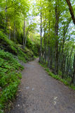 Footpath around the Lake Pavin in Auvergne Royalty Free Stock Image