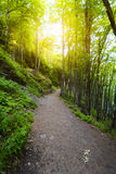 Footpath around the Lake Pavin in Auvergne Stock Images