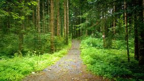 Footpath into the woods Royalty Free Stock Photography