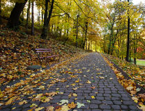 Footpath in autumn city park strewn with yellow fallen leave Stock Photo