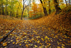 Footpath in autumn city park with yellow fallen leaves Royalty Free Stock Image