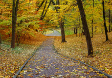 Footpath in the autumn city park with yellow fallen leaves Stock Photography