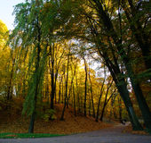 Footpath in autumn city park with yellow trees Royalty Free Stock Images