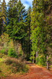 Footpath in autumn coniferous forest Royalty Free Stock Photos