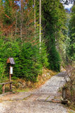 Footpath in autumn coniferous forest Stock Photos