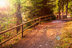 Footpath in autumn coniferous forest Stock Images