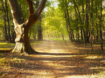 Footpath in autumn forest Stock Photos