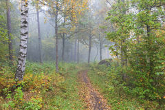 Footpath through the autumn forest Royalty Free Stock Photo