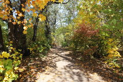 Footpath in autumn forest Stock Photography