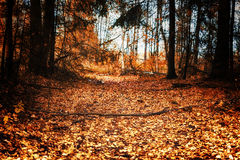 Footpath through autumn forest Stock Images